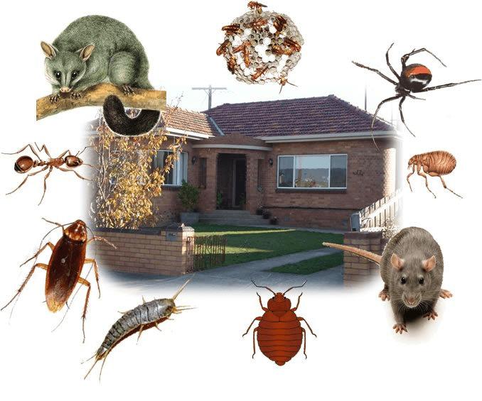 pest control kangaroo point